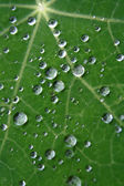 Drops on a leaf — Stock Photo