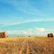 Bales at field — Stock Photo