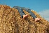 Descansar en heno — Foto de Stock