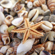 Seashells, starfish from the beach (macro) - Stock Photo