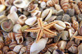 Seashells, starfish from the beach (macro) — Stockfoto