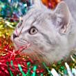 Cat in Tinsel — Stock Photo