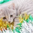 Cat in Tinsel — Stock Photo