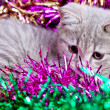 Cat in Tinsel — Stock fotografie