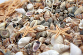 Seashells, starfish from the beach (macro) — Stock Photo