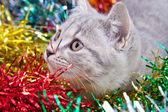 Tinsel kedi — Stok fotoğraf