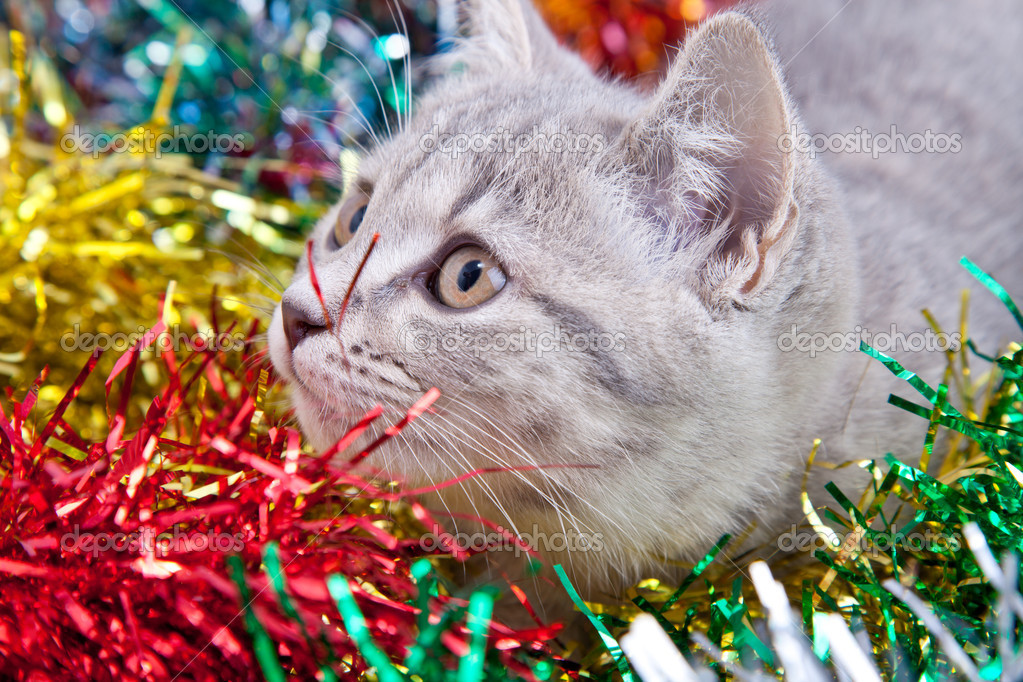 Gray cat in multy color tinsel — Stock Photo #15708905
