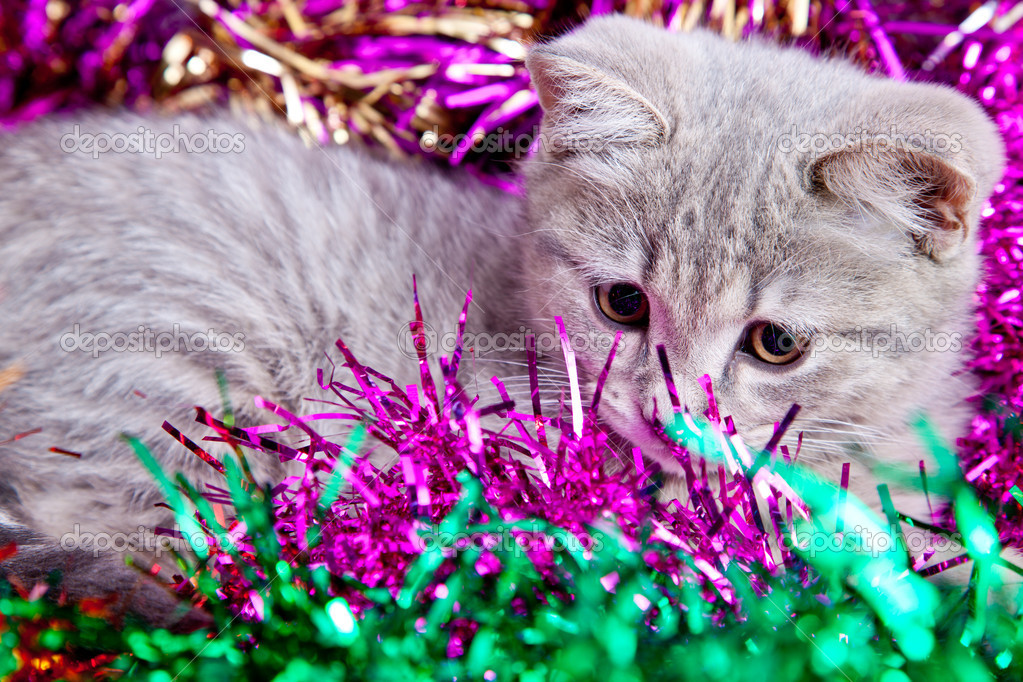 Gray cat in multy color tinsel — Stock Photo #15708917