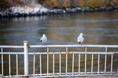 Seagulls sitting on a fence — Stockfoto