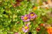 Honey bee on the flower — Stock Photo