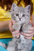 Closeup portrait of young cat on girls hands — Stock Photo