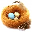 Quail eggs in a nest — Stock Photo #19188331