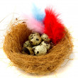 Nest with quail eggs and colored feathers — Stock Photo #19705143