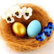 Gold and blue eggs in the nest - Stock Photo