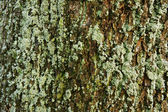 Bark of a tree covered with moss — Stock Photo