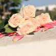 Peach-colored roses in pink petals — Stock Photo