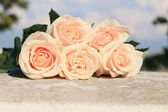 Peach-colored roses — Stock Photo