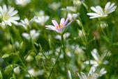 大自然花卉与荣誉 — 图库照片