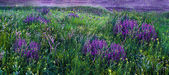 Lilac. Поле — Stockfoto