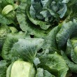 Stock Photo: Cabbage