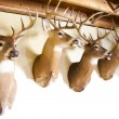 Deer heads — Stock Photo
