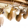 Stock Photo: Deer heads