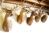 Deer heads — Foto de Stock