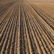 Plough agriculture field before sowing — Stock Photo