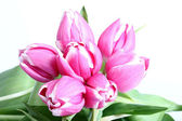 Group of pink tulips on white background — Stock Photo
