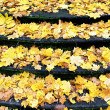 Autumn time with fallen leaves on old stone staircase — 图库照片