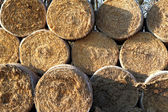 Dry wheat bale of hay on stock — Stock Photo
