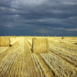 Harvest agriculture field with bale of hay - Stock Photo