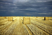 Harvest agriculture field with bale of hay — Stock Photo