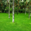 Palm forest and frash green gras — Stock Photo