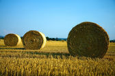 Bale of hay on the harvested agriculture field — Stock Photo