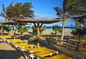 Beach sunbeds under palm — Stock Photo