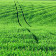 Stock Photo: Agriculture field