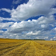 Harvested agriculture land — Stock Photo