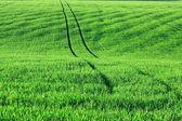 Domaine de l'agriculture — Photo