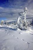 在山高的冰树 — 图库照片