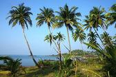 Plantación de palma de coco en la costa del sur de india — Foto de Stock