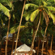 Stock Photo: Tropical resort under coconut palm in goa