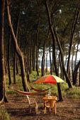Colored umbrella under pinus tree in INDIA — Stock Photo