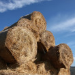 Bale of hay under blu sky  — Stock Photo