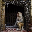 monkey temple — Stock Photo