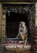 Monkey temple — Stock Photo