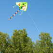 Kite in the sky — Stock Photo