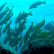 School of Fish — Stock Photo #15771093