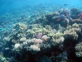 Paisaje submarino — Foto de Stock