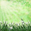 Stock Photo: Snowdrops on green abstract background